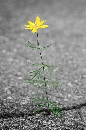 A Flower Blooms on Asphalt