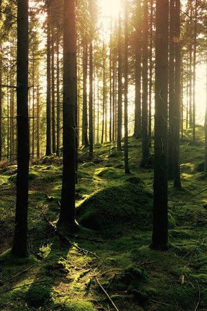 The Forest of Algina